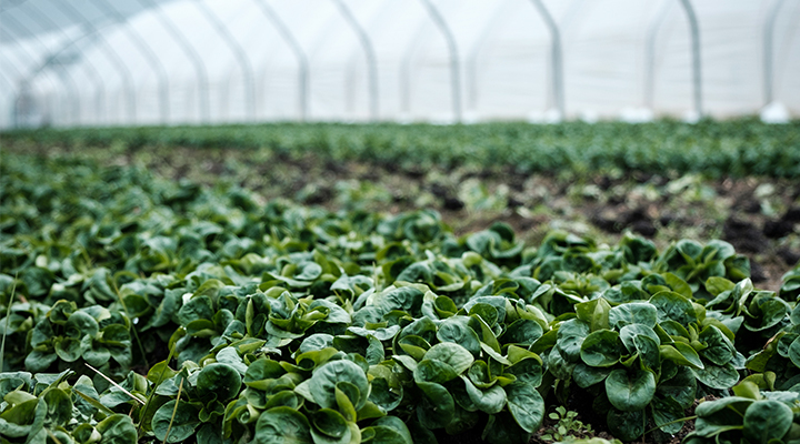 Pompe per l'agricoltura | Viessepompe
