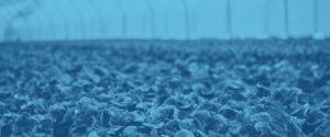 Pompe per l'agricoltura 2 | Viessepompe